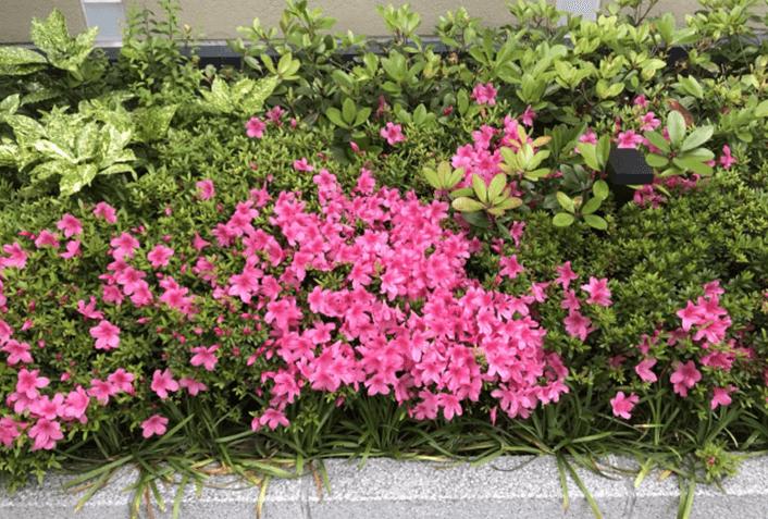 花びらや落ち葉が近隣に飛び散る