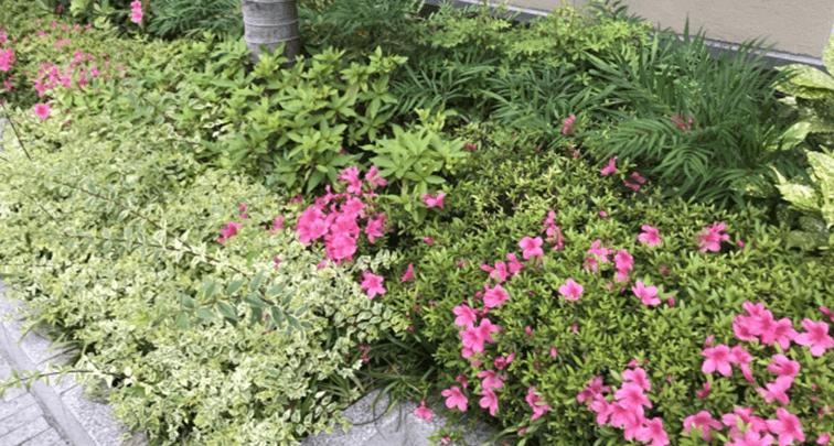 庭のガーデニングでよくあるトラブルと対処法を紹介!